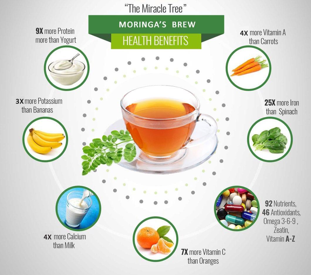 Moringa Brew by Unica Agro - Infographic on benefits of Moringa brew
